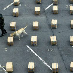A policeman and his sniffer dog walk around packages totalizing 3.224 kg of marijuana seized on July 15, 2008, in Cali, Valle del Cauca department, Colombia. AFP PHOTO/Carlos Julio MARTINEZ (Photo credit should read CARLOS JULIO MARTINEZ/AFP/Getty Images)
